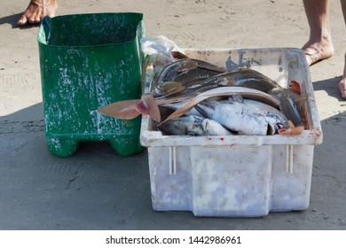 Fish, fishes on the coast in a bowl. Typical fish of the sea. Cacao, Grouper, Tuna, Corvina. To be cleaned and consumed. Green bucket.