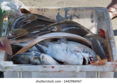 Fish, fishes on the coast in a bowl. Typical fish of the sea. Cacao, Grouper, Tuna, Corvina. To be cleaned and consumed.