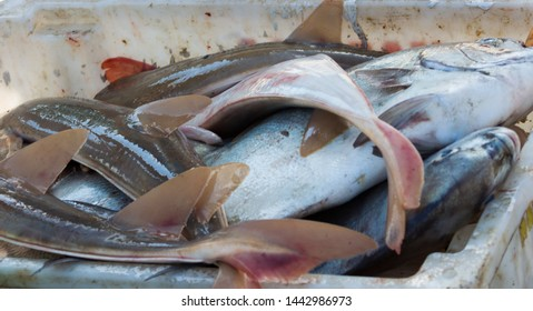 Fish, fishes on the coast in a bowl. Typical fish of the sea. Cacao, Grouper, Tuna, Corvina. To be cleaned and Consumed. Close.