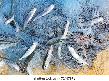 Fish in a fishing nets
