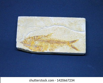 Fish Fossil in light brown stone