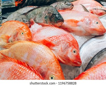 fish fresh in the supermarket