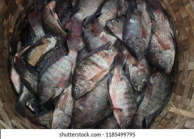 fish gotcha at lake