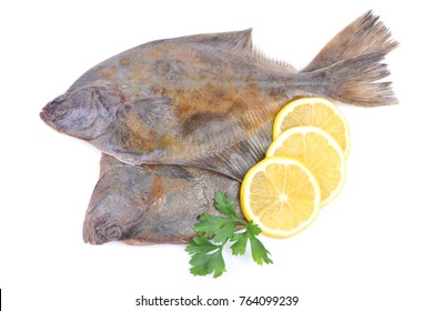 Fish halibut on white background