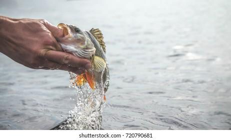 Fish in hand fisherman. Fishing.