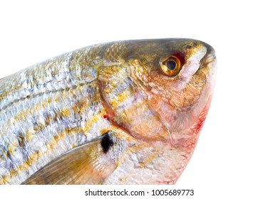 fish head on white