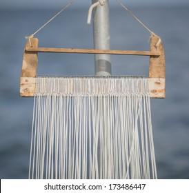Fish hooks from a 100 hooks longline used to catch cod, haddock, saithe, tusk, halibut and similar sized fish