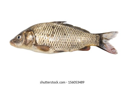 fish isolated on a white background
