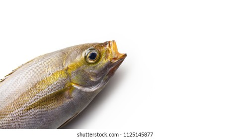 A fish jumping out with an open mouth from the corner of the screen, excellent for some fish phrase.