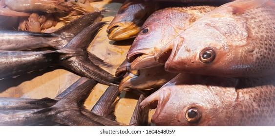 fish at kaemari fish market, Karachi, Pakistan