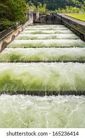 Fish ladder at the Bonneville Dam, Oregon