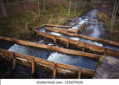 Fish ladders aid salmon on their upstream migration on small river