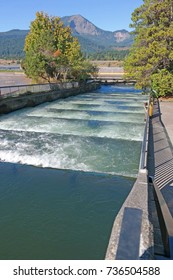 Fish Ladders - Salmon and other migratory fish pass through these water ladders at Bonneville Dam on the Columbia river, Oregon.