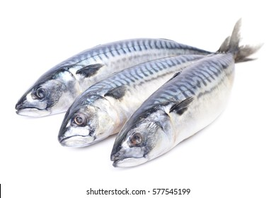Fish mackerel