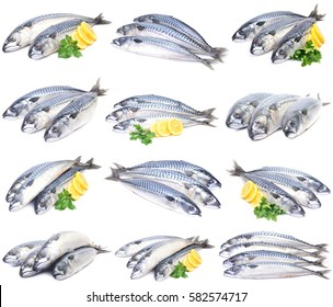 Fish mackerel collection