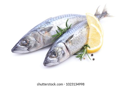 Fish mackerel on a white background