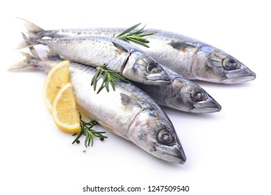 Fish mackerel on a white background