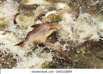 A lot of fish Many fish eat snacks. Water splash It is a visual art to look