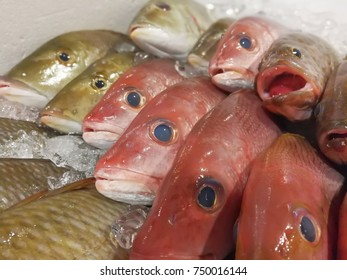 Fish market as a background or wallpaper.