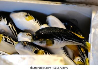 Fish market : Blowfish