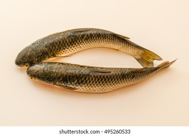 fish, mullet, fresh, background, food, river.