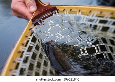 Fish in the net. Fly fishing.