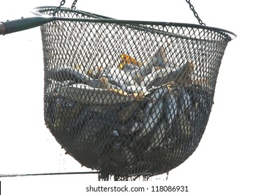 fish in a net - white background