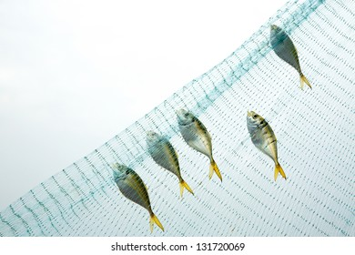 Fish netted.