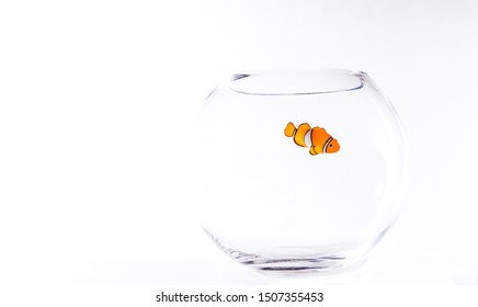 the fish with no water in a bowl, it can be Nemo or a good fish being home alone in his bowl