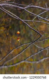 Fish off, Bobber hanging from a branch with fall reflections
