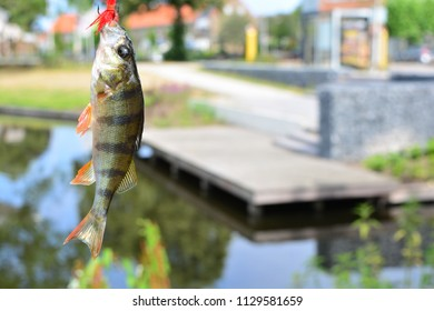 Fish on the fishing hook