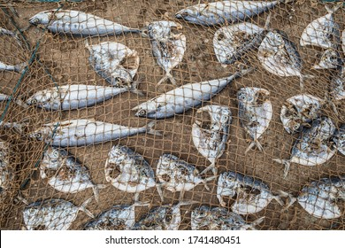 Fish on the ground under a net being dried in the sun.