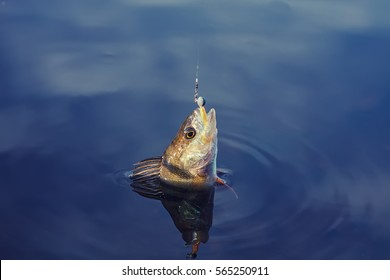 Fish on the hook