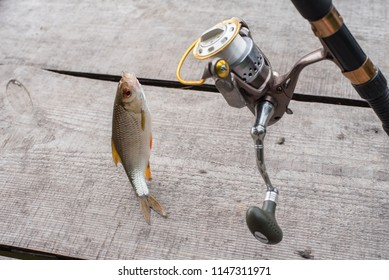 Fish on a hook, fishing rod and spinning wheel, on a wooden background.