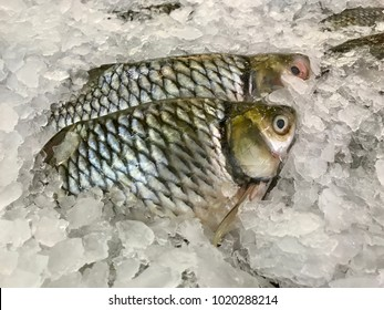Fish on ice in the supermarket