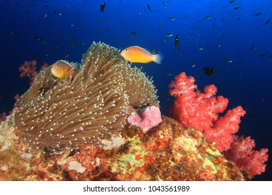 Fish on underwater coral reef in Thailand