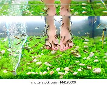 fish pedicure spa treatment, rufa garra fish