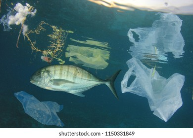 Fish and plastic ocean pollution