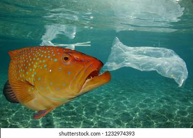 Fish and plastic pollution. Plastic bags in ocean contaminate seafood