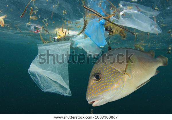 Verschmutzung durch Fische und Plastik. Umweltproblem - Kunststoffe kontaminieren Meeresfrüchte