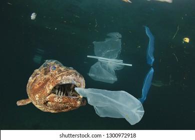 Fish and plastic pollution in sea. Microplastics contaminate seafood