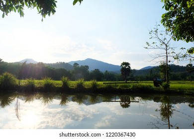 Fish pond in rice farm of Northern Thailand