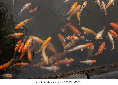fish in a pool