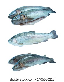 Fish rainbow trout, isolated on a white background. Two trouts over white background. Fish with copy space for text. Rainbow trout isolated on a white. Set of rainbow trout fish.