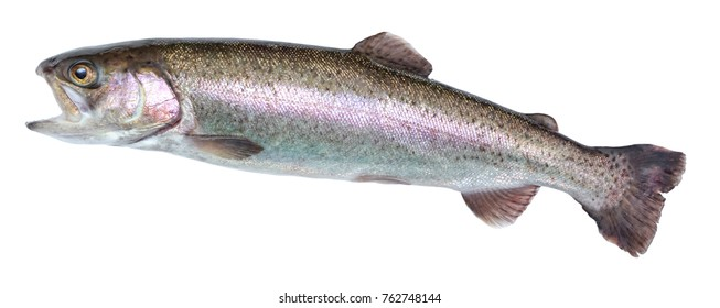 Fish rainbow trout, jumping out of the water, isolated on a white background