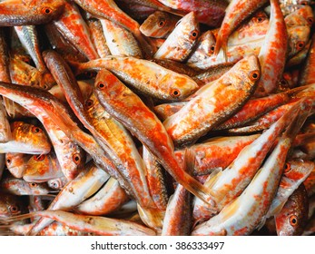 Fish Red mullet