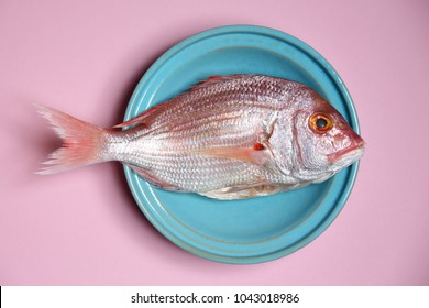 fish - red Sea bream or Dorade rose in a turquoise bowl on pastel pink background