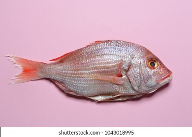 fish - red Sea bream or Dorade rose on pastel pink background