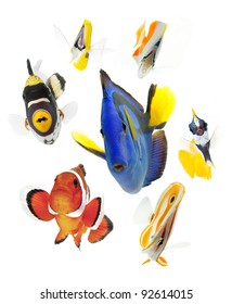 fish, reef fish, marine fish party isolated on white background