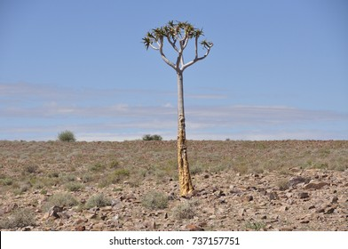 Fish River canyon in Namibia; the Grand Canyon of Africa. A solitary tree tries to survive.